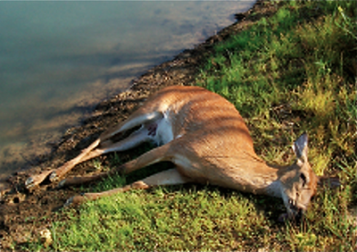 dead-atlanta-deer-in-yard